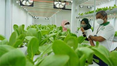 PLN Dukung Program Container Farming Pertama di Ibu Kota, Percepat Masa Tanam Hidroponik