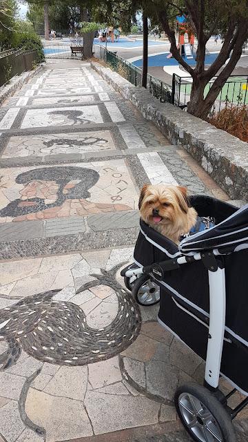 Bronco im InnoPet Monaco Hundewagen in Nizza