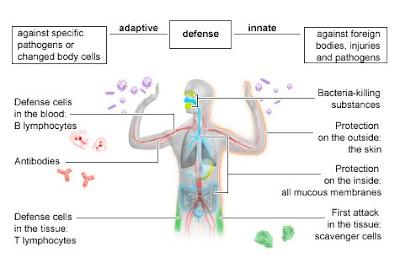 natural immune system