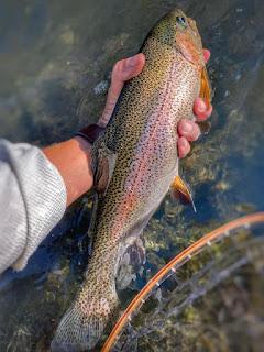 Fly Fishing, Oregon Fly Fishing, Trout Fly Fishing, Cari Ray