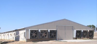 How to make good Poultry control Shed