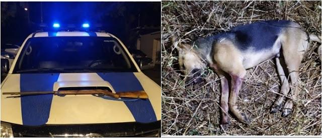 Guarda Municipal prende homem suspeito de matar cachorro com tiro na zona rural de Paramirim