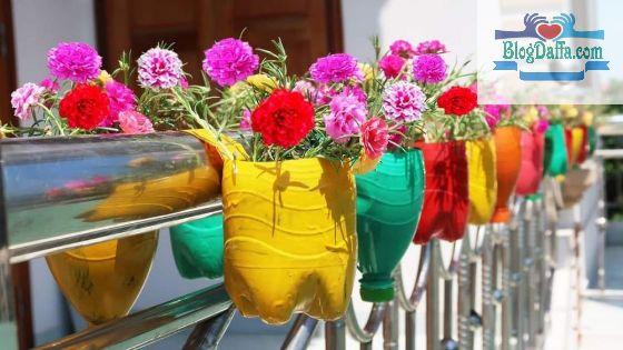 Cara Menanam Bunga Krokot di Botol Bekas dengan Mudah