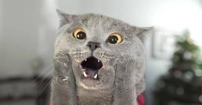 ¿Qué hacen los gatos cuando están solos?