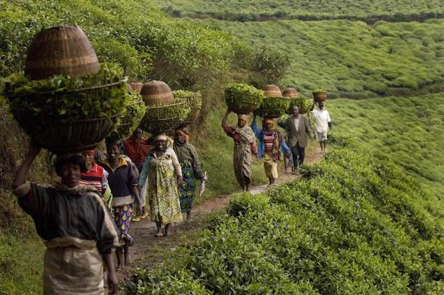 100 Gunde 1 Milyon kisinin öldürüldügü Rwanda soykırımında Fransa'nin rolu