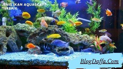 Ikan Aquascape Terbaik dan Terfavorit