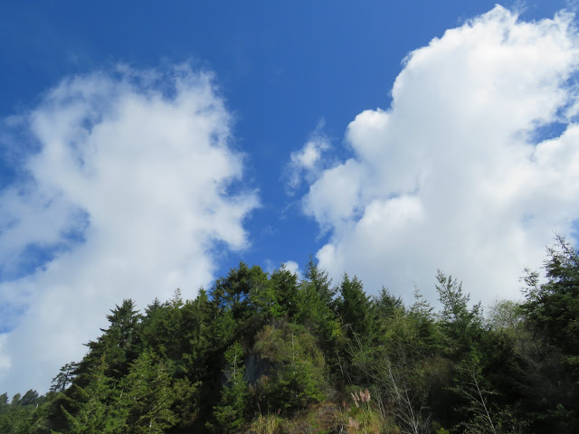 blue sky, clouds, and trees
