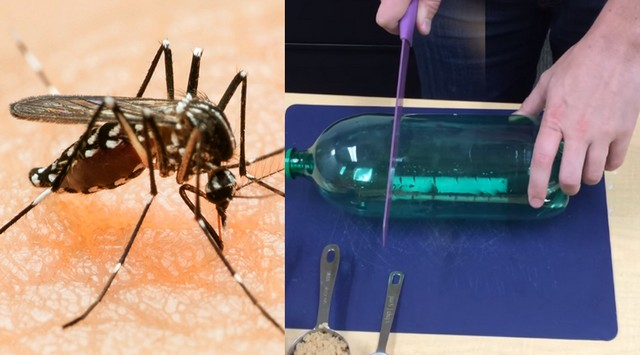 Perangkap Nyamuk dan Cara Membuatnya