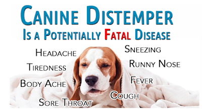 Canine Distemper in Dogs – A Brief Overview