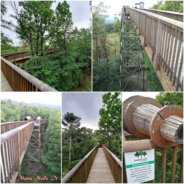 Baumwipfelweg in Althodis (Burgenland) -Treetop path