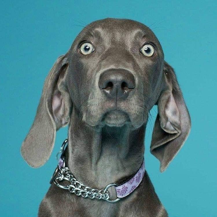 Hilarious Dog Expression