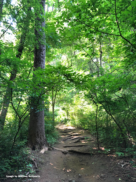 A dirt path perforated with tree roots beckoned us through the forest at Ridley Creek State Park.