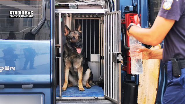 Αστυνομικός σκύλος στην Αργολίδα εντόπισε 3 κιλά κάνναβης σε αποθήκη
