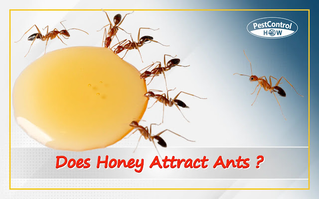 does-honey-attract-ants