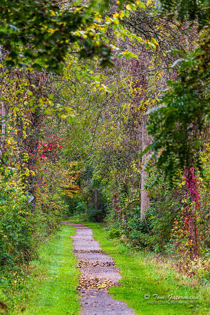 A westward view along the Erie Canal Trail at Memphis, NY.