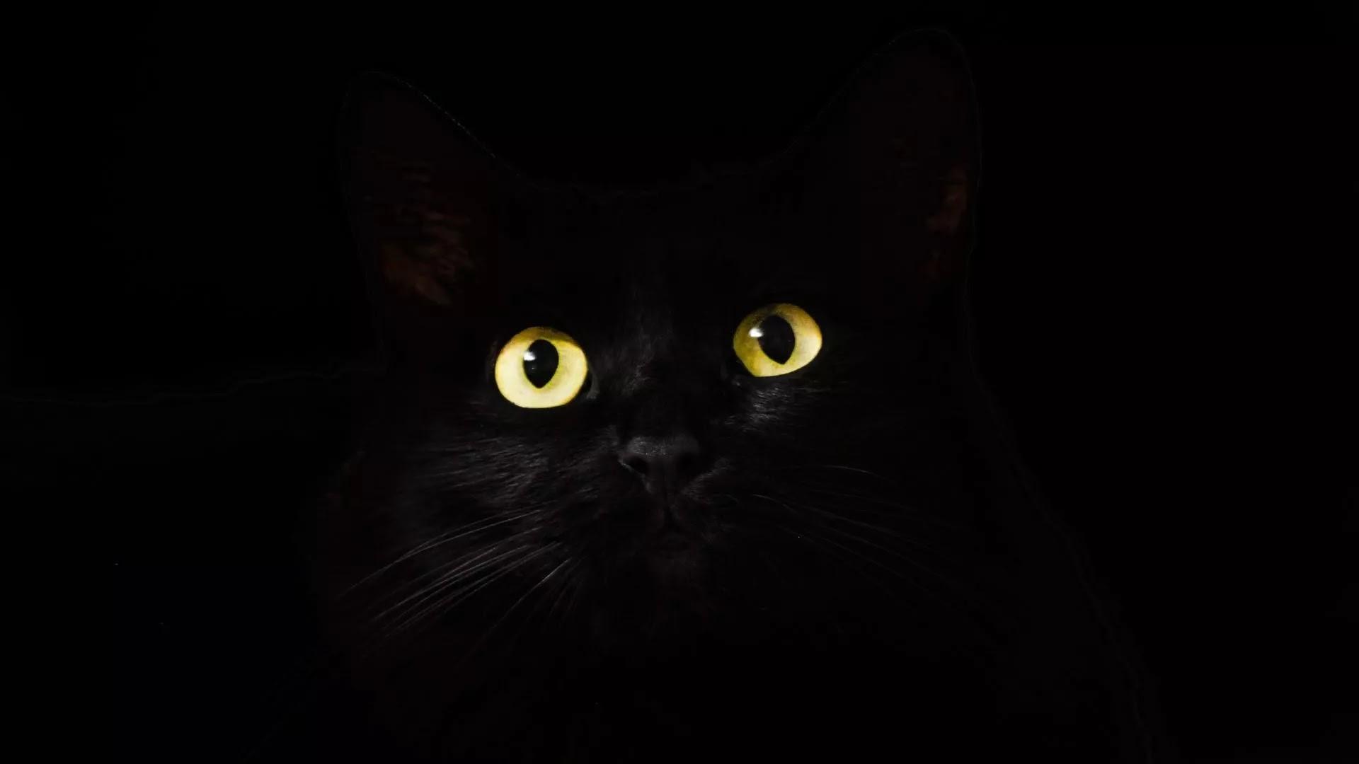 Black wallpaper cat eyes