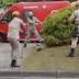Jacaré de mais de 2 metros é resgatado após quase morder mulher; veja vídeo