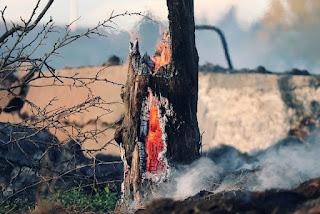 Imagem:Incêndios florestais no interior da Bahia consome vegetação