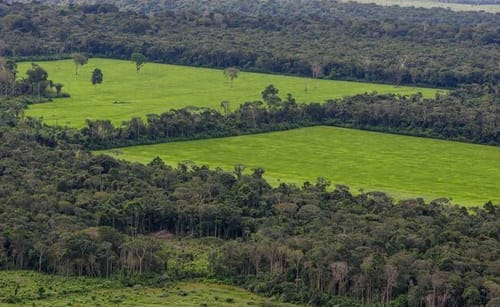 Facebook fights against selling Amazon rainforest land through its marketplace
