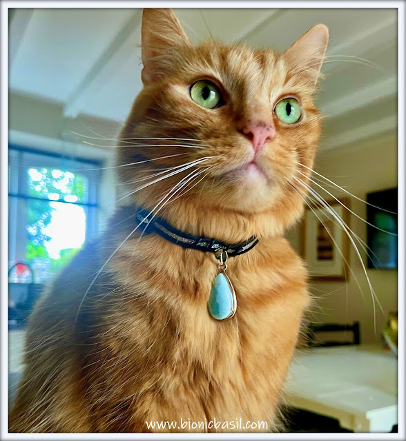 Ginger Cat Wearing a Larimar and silver pendant, beautiful cat wearing larimar crystal pendant