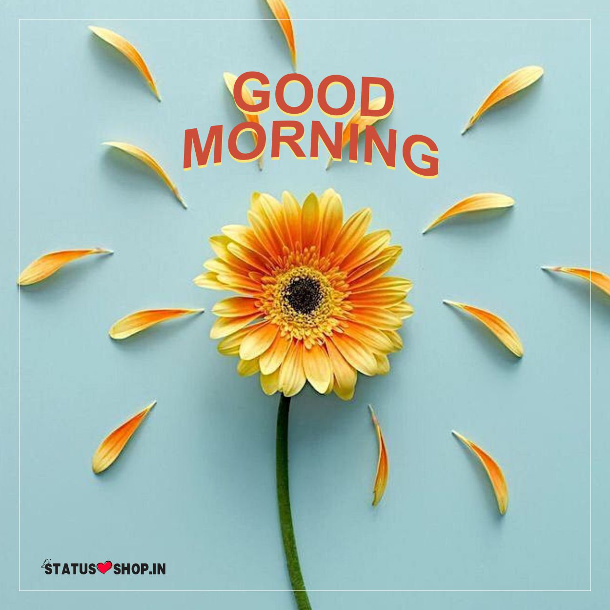 Morning-Pics