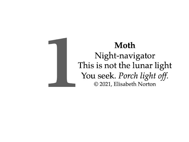 Poem 1: Moth Night-navigator  This is not the lunar light You seek. Porch light off. © 2021, Elisabeth Norton