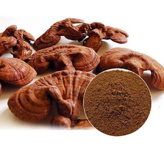 Reishi mushroom supplement supplier in Raigad