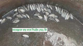 বায়োেফ্লকে মাছ চাষে পিএইচ (PH) কি? Biofloc Fish Framing (পর্ব ১১)