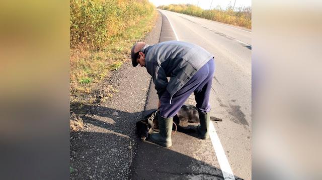 Сахалинец привязал собаку к авто и проехался на полной скорости, а после выкинул в канаву