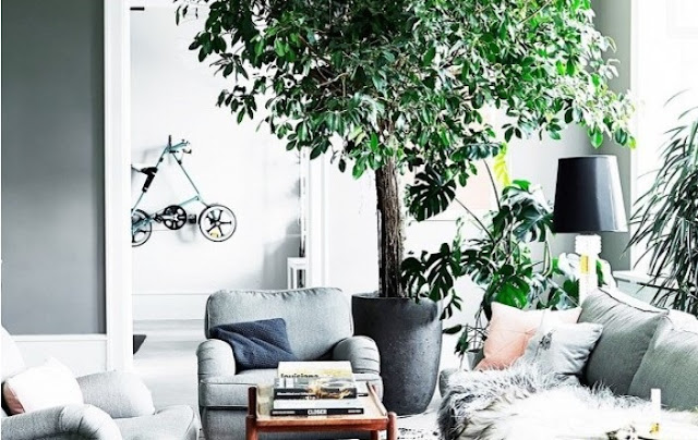 trees for decorating indoors