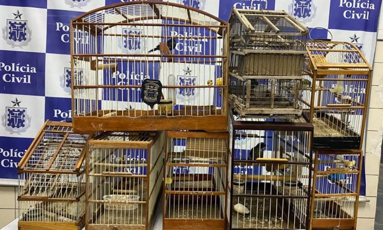 Polícia Civil resgata pássaros silvestres em Jequié