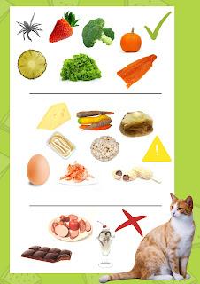 ¿Puede mi gato comer eso? 30 alimentos que los gatos pueden y no pueden comer