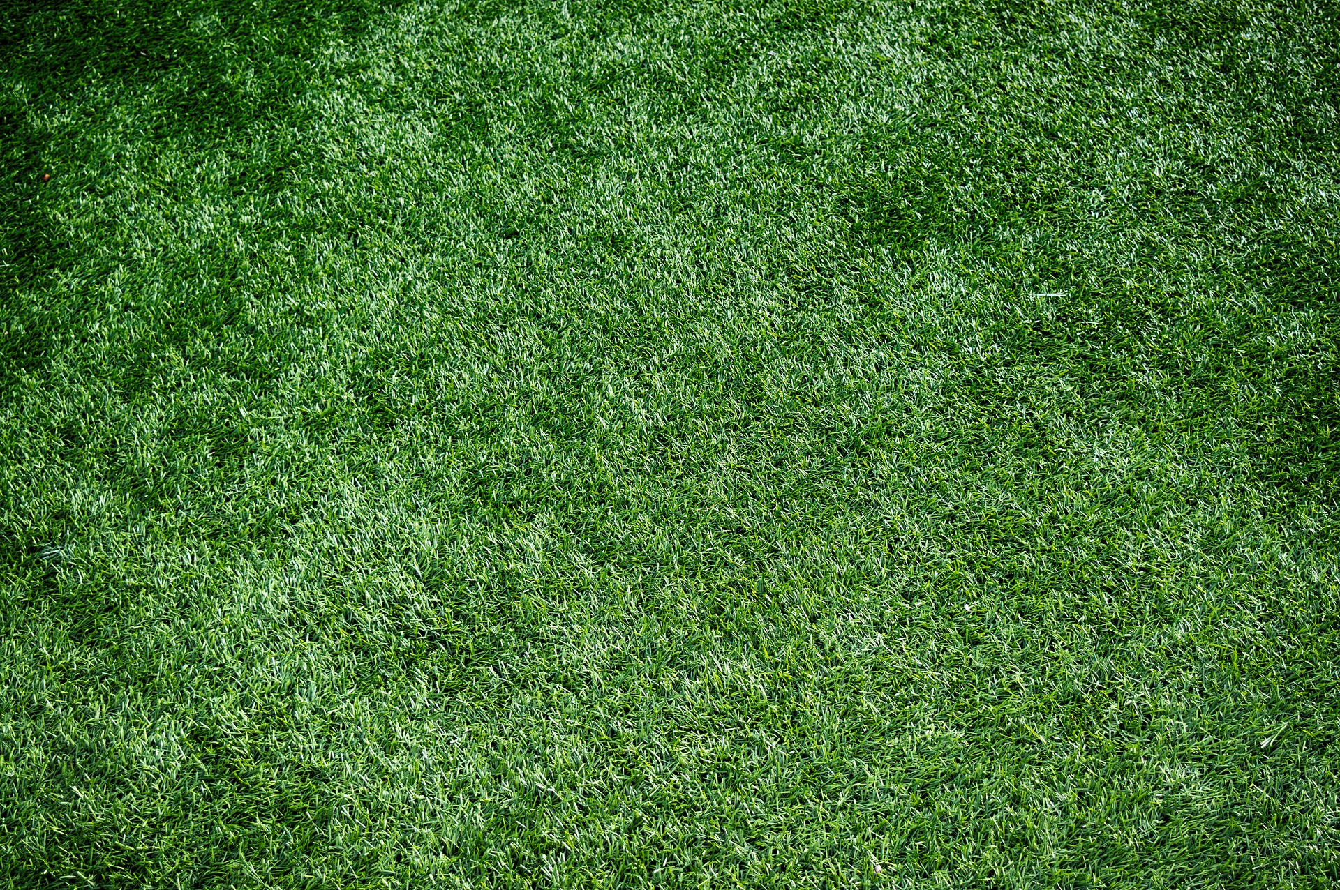 Synthetic grass lawn