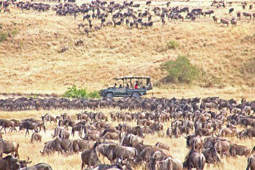 Serengeti wins 2021 Africa's Leading National Park