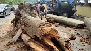 Cuaca Ekstrem, Satu Pohon Tumbang Timpa Sebuah Warung di Parapat