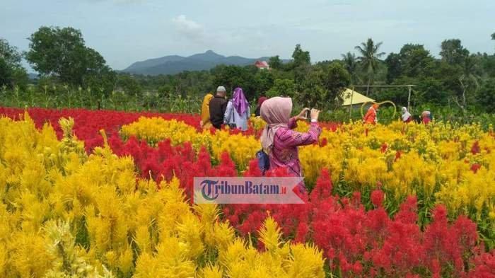 Taman Bunga Celosia Riau Yang Instagenic