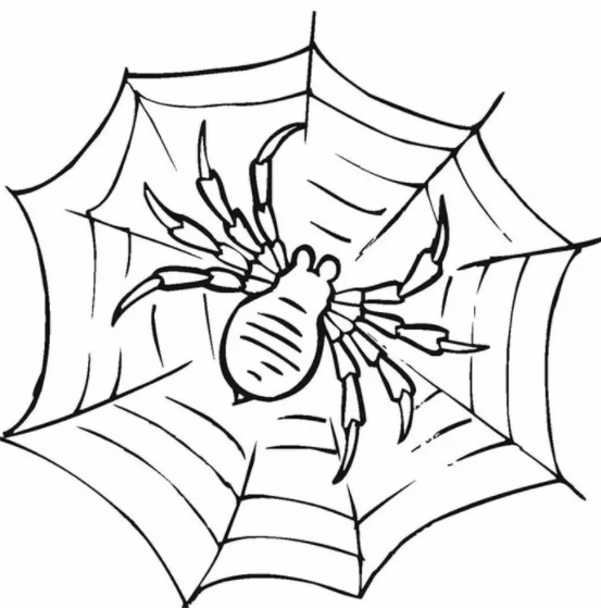 Spider Web Coloring Pages
