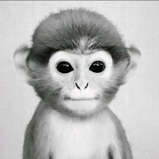 Monkey Pfp Tiktok