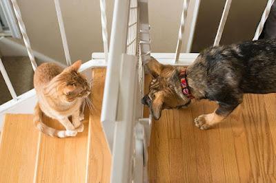 ¿Cómo presentar perros y gatos?