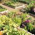 Да поговорим за градината и за това как да оптимизираме производителността