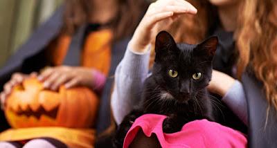 Los gatos negros y Halloween: Mitos y verdades