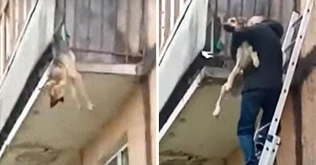 История собаки Рады, которая без сил свисала с балкона