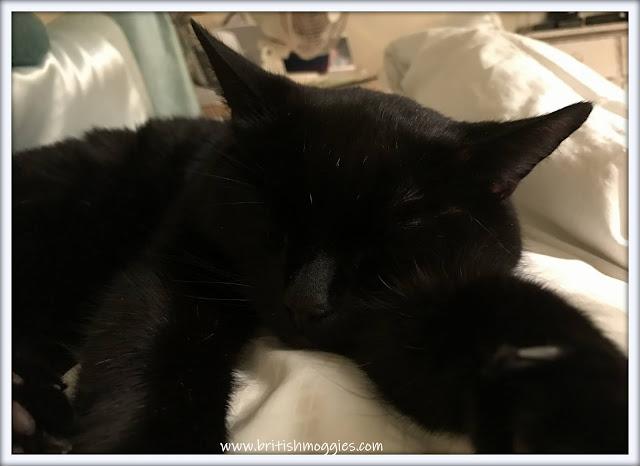 sleeping black cat, cat napping, cute cat in bed, black cat