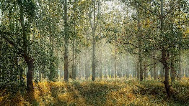 Berbagai Jenis Manfaat Hutan