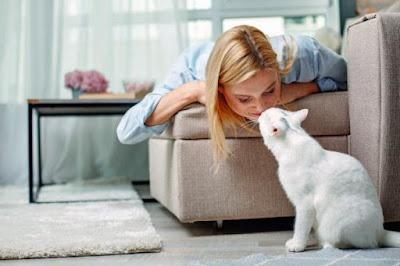 Por qué mi gato huele mi nariz