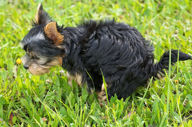Why Is My Dog Constipated? And What Can I Do About It?