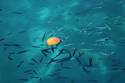 Peralatan Microfishing yang Kamu Butuhkan untuk Mancing Ikan Kecil