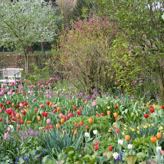 Combinar diferentes plantas bulbosas que florecen en primavera para prolongar el período de floración en el jardín