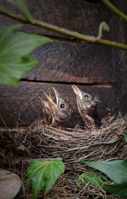 Un tronco, un pájaro, una mano