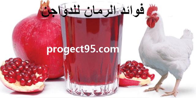 فوائد الرمان للدواجن وهل الرمان يزيد وزن الفراخ ام لا